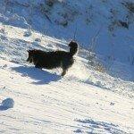 Hundezubehör wird überbewertet